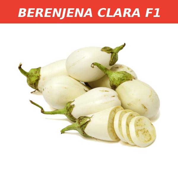 BERENJENA CLARA F1