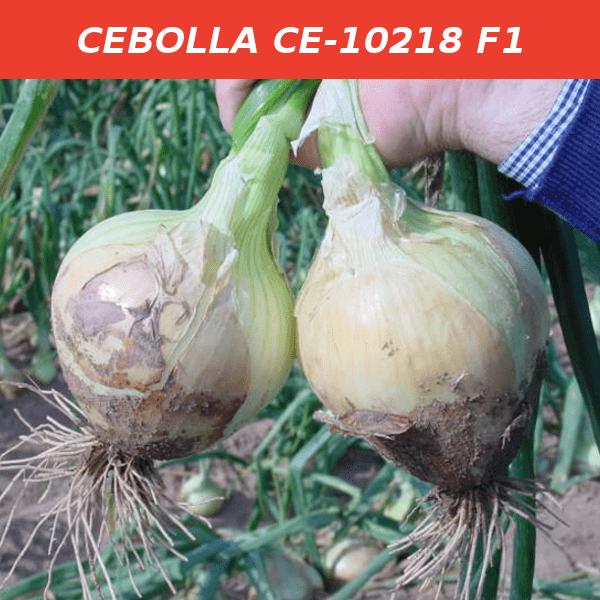 CE-10218 F1