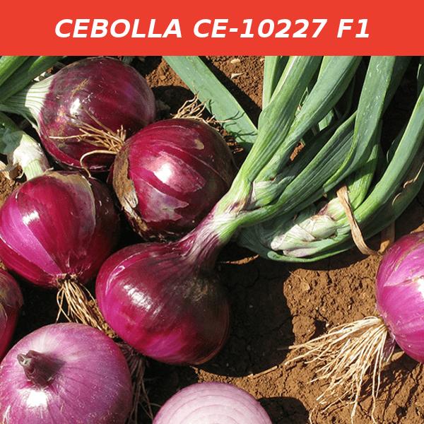 CE-10227 F1