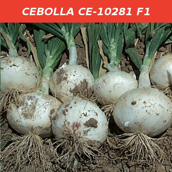 CE-10281 F1
