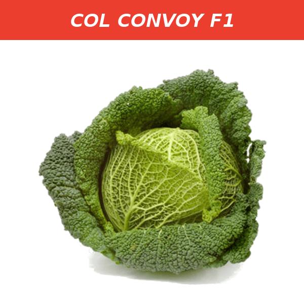 CONVOY F1