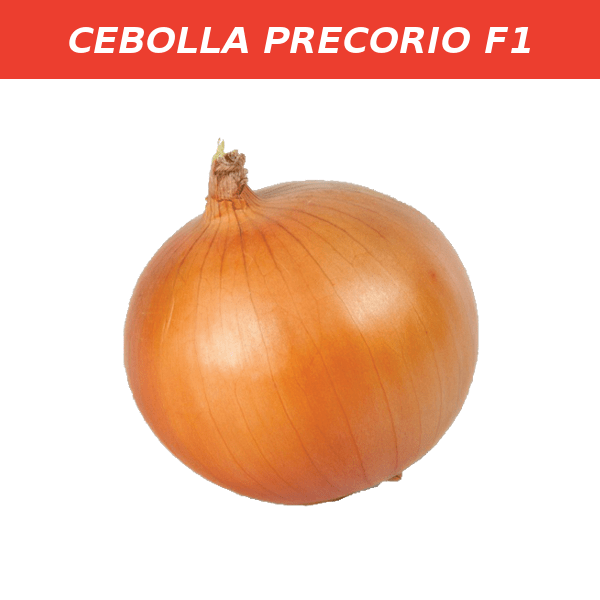 PRECORIO F1