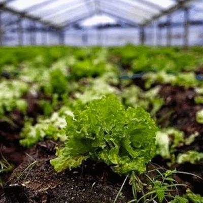 Cultivo Semillas Hortícolas