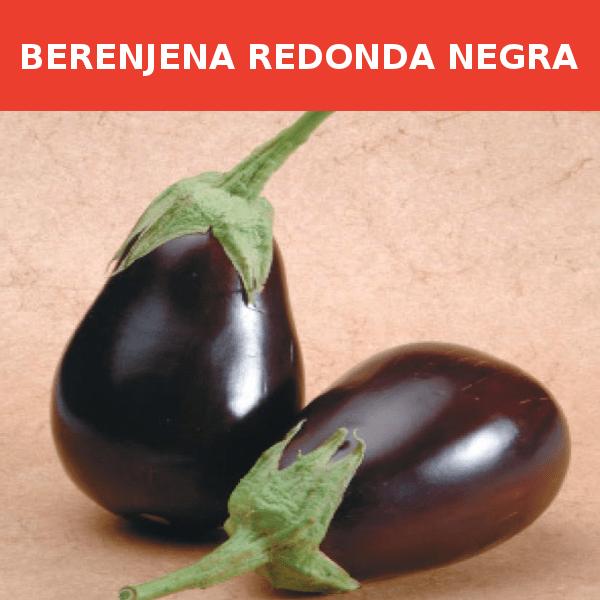 Semilla Berenjena Redonda Negra