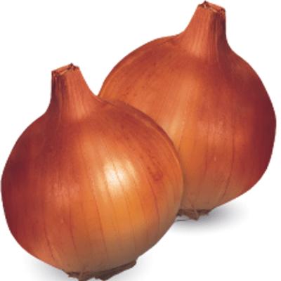 Semillas Cebolla Día Intermedio