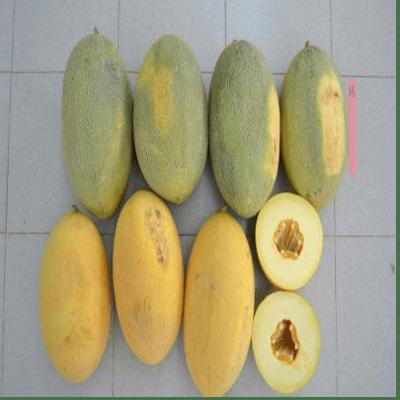 Semillas de Melones Ananas