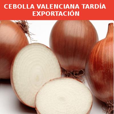 Semillas Cebolla Valenciana Tardía Exportación