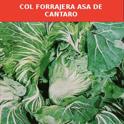 Semillas Col Forrajera Asa de Cantaro