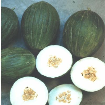Semilla de Melones Rochet