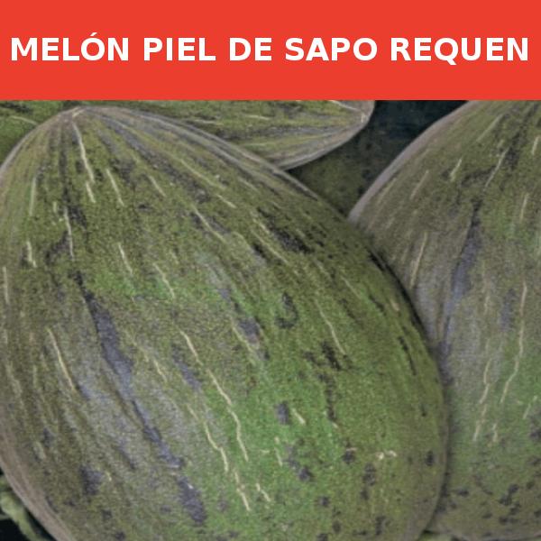 Semillas Melon Piel de Sapo Requen