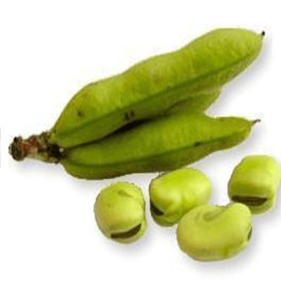 Semillas de Habas