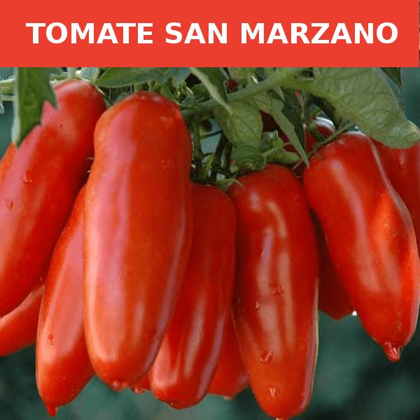 semillas-tomate san marzano