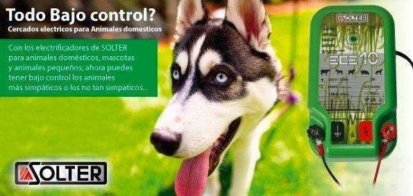 pastor electrico para perros y animales domésticos