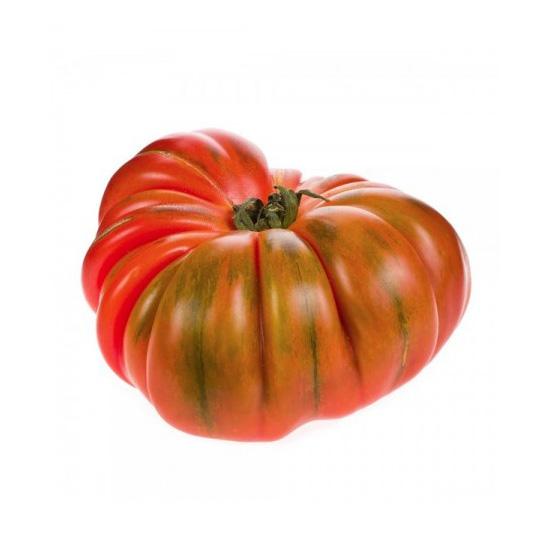 Plantel de Tomate híbrido Raf (aplanada piel gruesa)