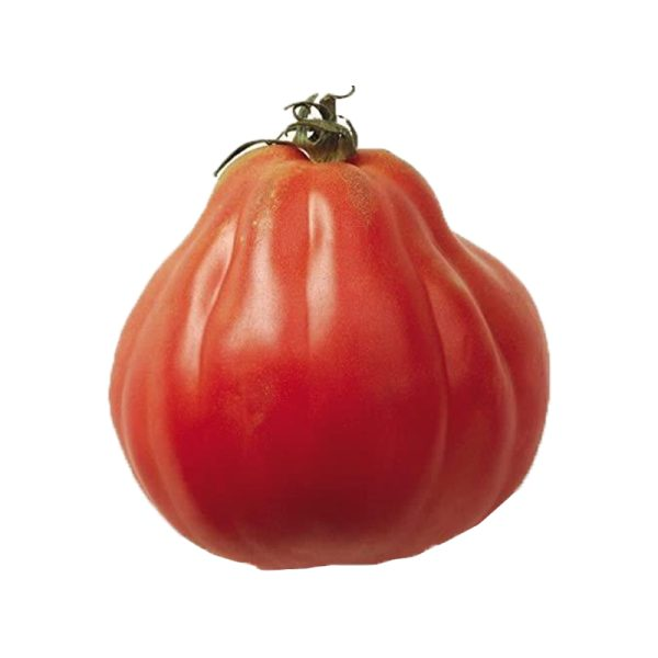 Plantel de Tomate standard Corazon buey