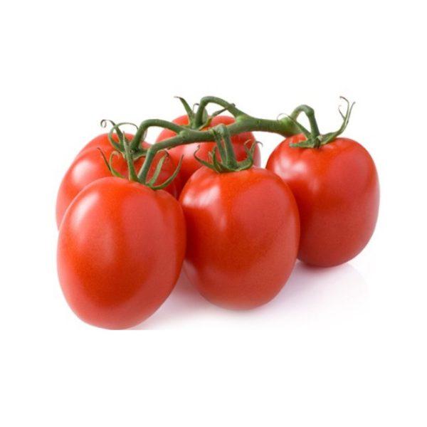 Plantel de Tomate standard Pera rastrera