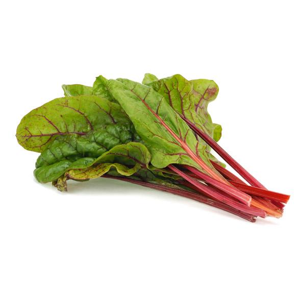 planta de acelga roja