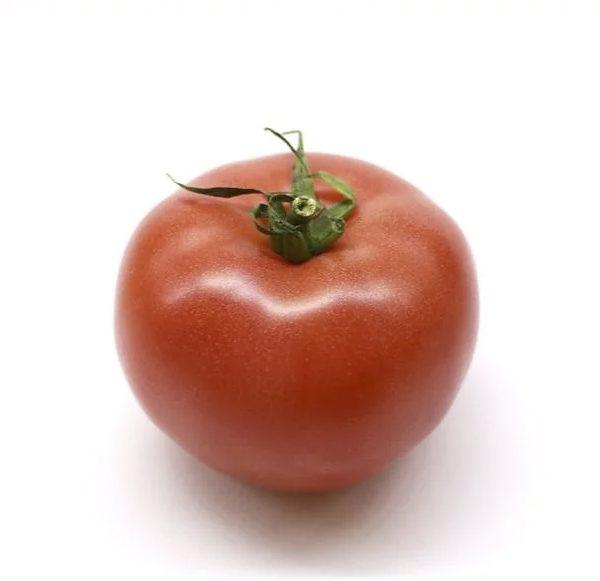 Plantel de Tomate híbrido Anairis (redonda piel gruesa)