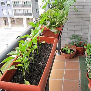 huerto balcon