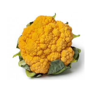 Plantel de coliflor naranja