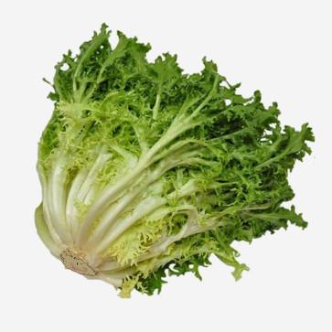 Escarole Pflanze