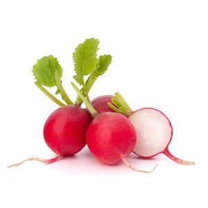 Plantel de Rabanito Rojo